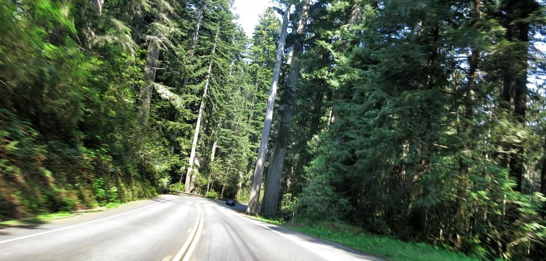 del norte redwoods