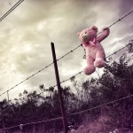 teddy bear barbed wire fence